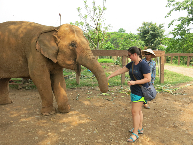 Animals for use in the tourism industry is a perfect example. Did you know that riding an elephant is harmful? That's why you should just feed them fruit instead :)